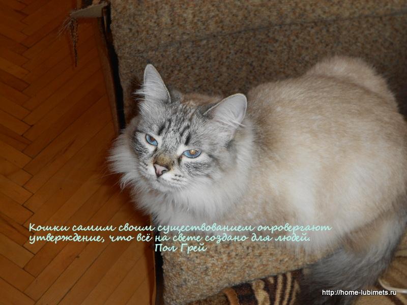 Кошки. Афоризмы, высказывания, мысли и цитаты о кошках
